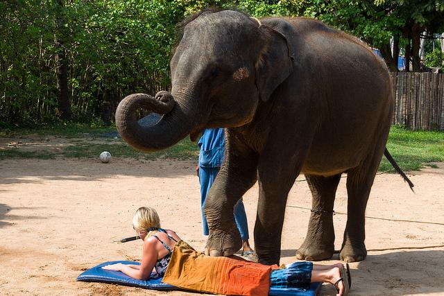 Слон делает массаж в Тайланде